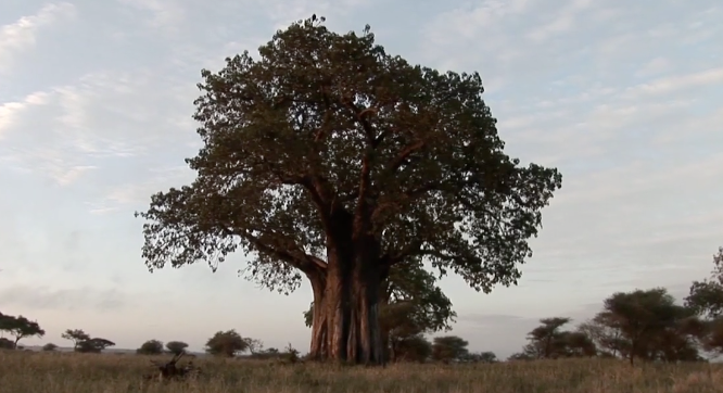 Lone Tree2