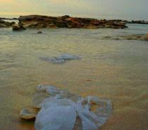 Our Plastics Problem