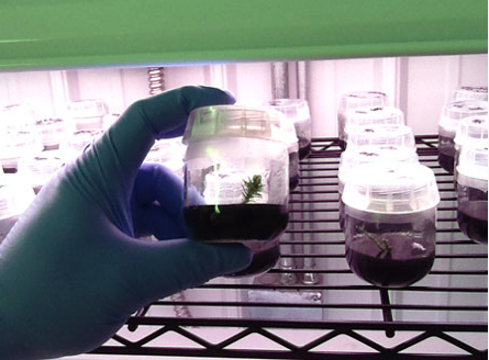 Micropropagation Lab Pioneered by AATA