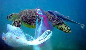 Plastic with turtle