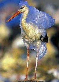 Sea Bird in plastic
