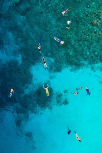 swimmers-and-reef